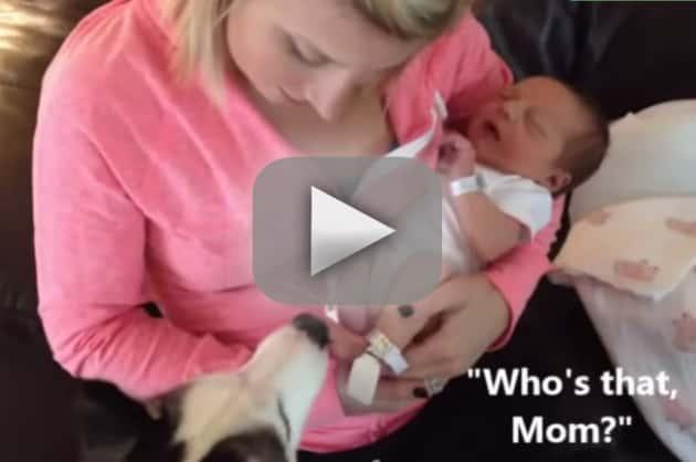 Dog Welcomes New Baby: HOORAY!!!