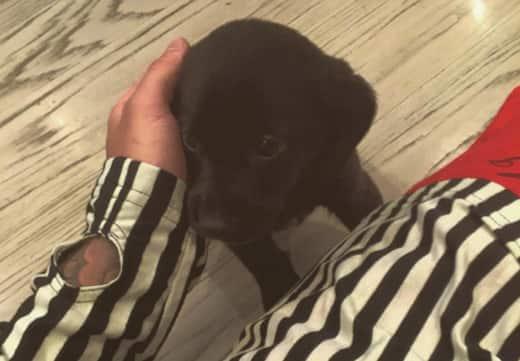 Justin Bieber Puppy