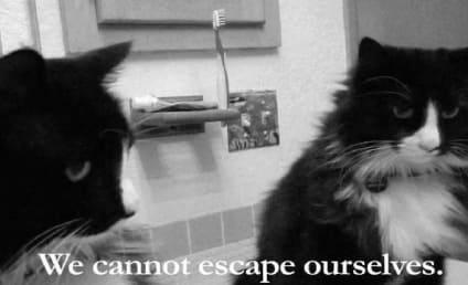 First Annual Cat Video Film Festival Winner: Revealed!