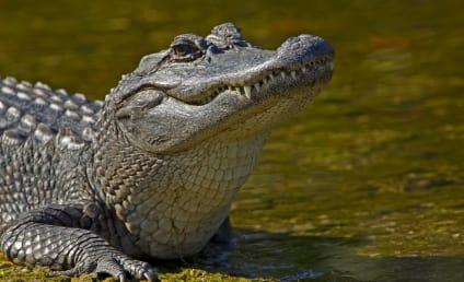 Florida Burglar Hides in Gator Lake, Gets Eaten By Gator