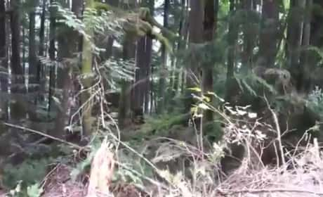 Sasquatch Sighting in Canada