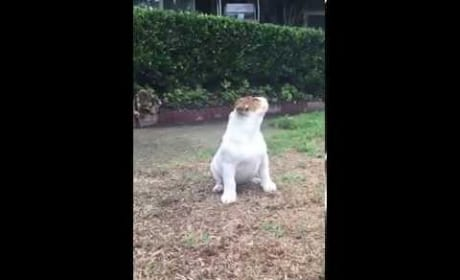 Cutest Bulldog of All-Time is Baffled by the Rain
