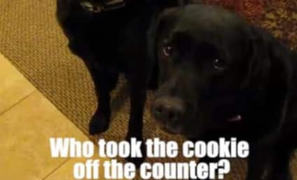 Dog Turns on Sister, Points Paw at Cookie Snatcher