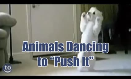 Animals Dance to Salt-n-Pepa: Get Down, Gorilla!