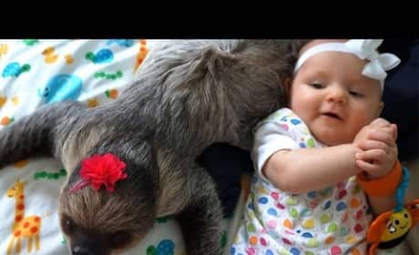 Baby and Sloth: Total Best Friends!