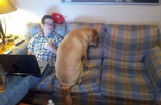 Couches are confusing