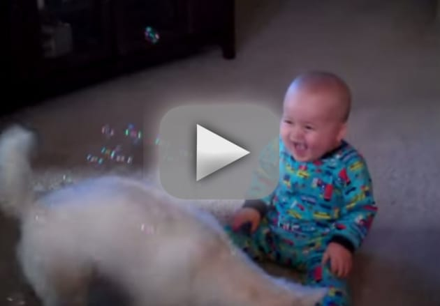 Baby Laughs at Bubble-Eating Dog