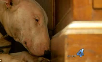 Dog Refuses to Leave Late Owner's Body, Remains in Mourning