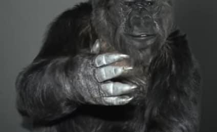 Koko the Gorilla Passes Away at 46