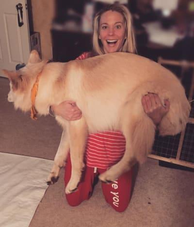 A Big Dog