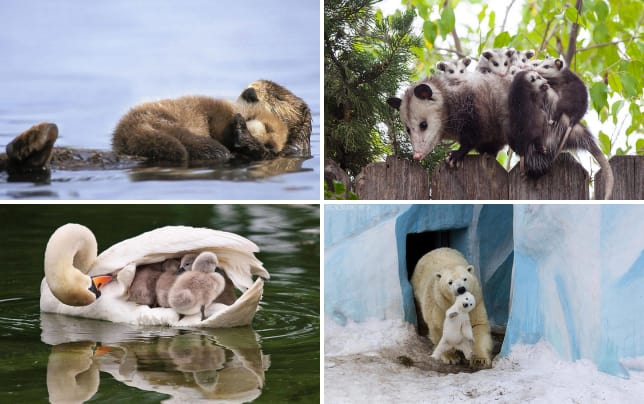 21 animals acting as adorable parents otter ly adorable
