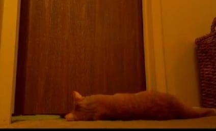 Cat Alarm Clock: So Cute, So Annoying