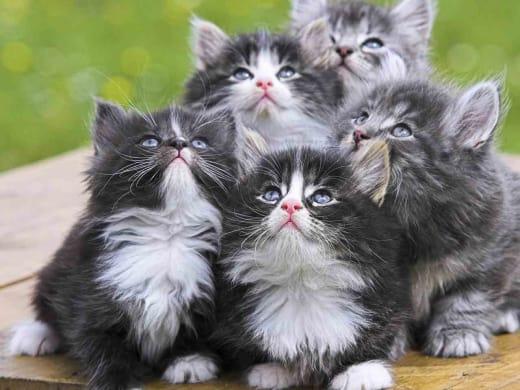 Kitties Pic