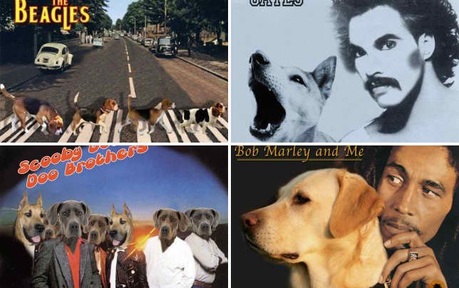 Dogs cover famous music albums the beagles