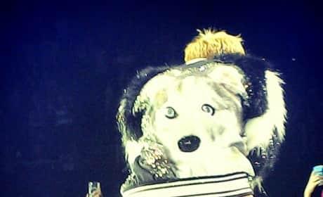 Miley Cyrus: Bangerz Dog
