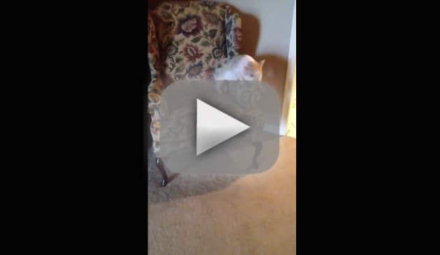 Pig Humps Armchair