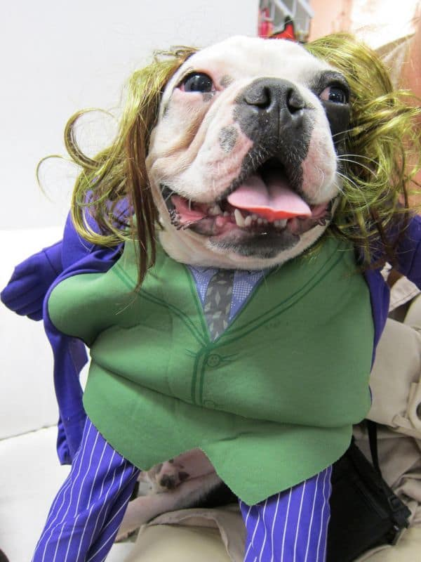 13 Dogs Who Are Dressed Like Clowns For Some Reason