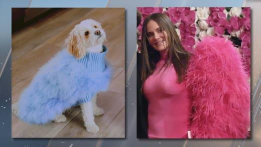 Meredith Marks coincide con su perro