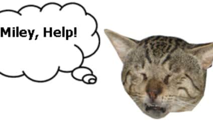 Fan to Miley Cyrus: Return to Twitter... or I Murder a Kitten!