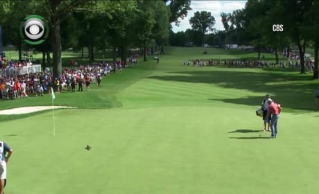 Squirrel Interrupts Tiger Woods
