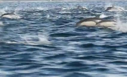 Dolphin Stampede Overwhelms Whale Watch Tour Boat
