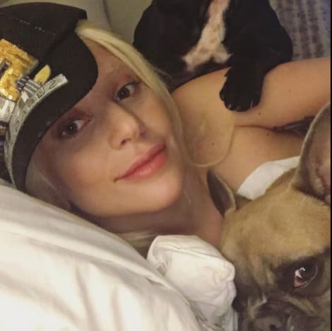 Lady Gaga's Dogs: Found! But Are They Okay?!?