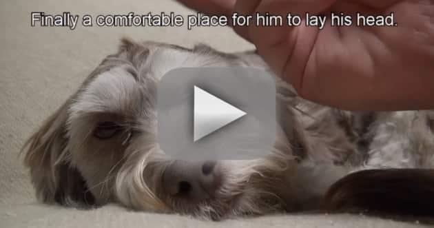 Stray Dog Rescue: Caught on Camera