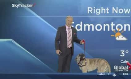Weatherman Invites Dog on Set, Immediately Regrets It