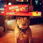 Dog and Board Games