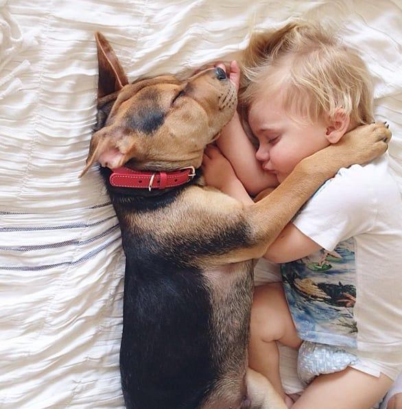 Dog Steals Baby Toy