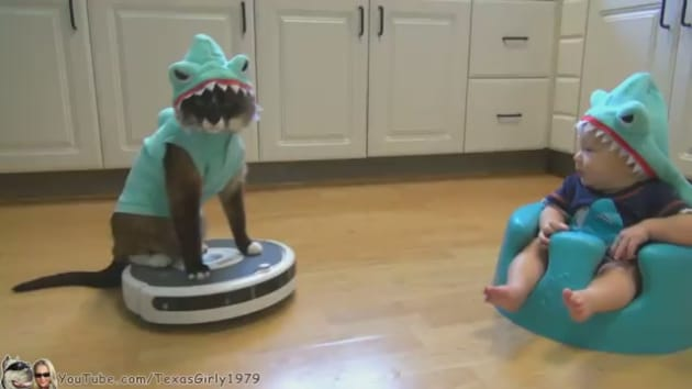 shark cat rides roomba  hangs out with shark baby