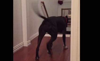 Pit Bull Overcomes Fear of Doorways, Walks Through Backward