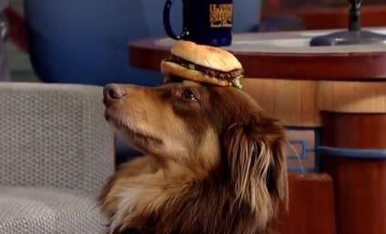 Amanda Seyfried, Dog Wow Late Show Viewers