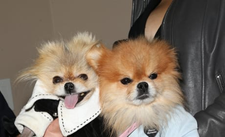 Giggy and His New Brother, Prince Harry Attend Mark Zunino Atelier Opening
