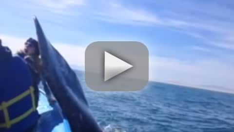 Whale Hits Girl in the Face