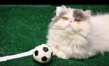 FIFA Felines: Cats Make Like World Cup Players, Reenact Exciting Goals
