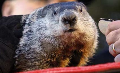 Punxsutawney Phil: Groundhog Day Weather King Set to Nail it This Year?