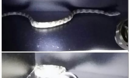 Snake Discovered in Portland Locker Room Prior to Playoff Loss