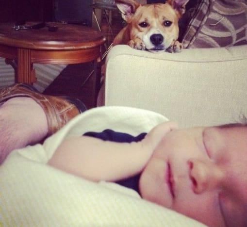Dog Adores Newborn