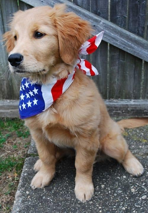 Red, White and... CUTE!