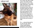 "Man Puts Girlfriend on Craigslist, Sticks Up for ""High Maintenance"" Dog"