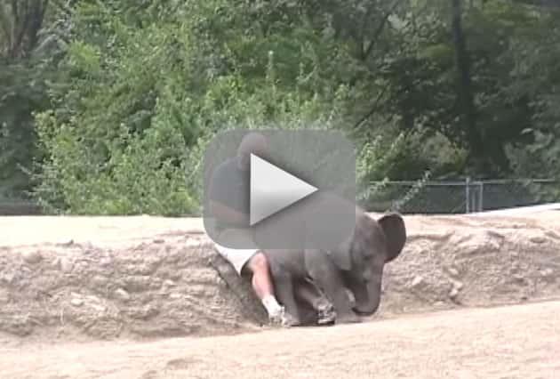 Elephant Sits on Man's Lap
