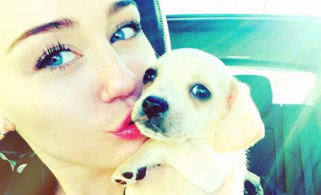Miley Cyrus, Pet Dog