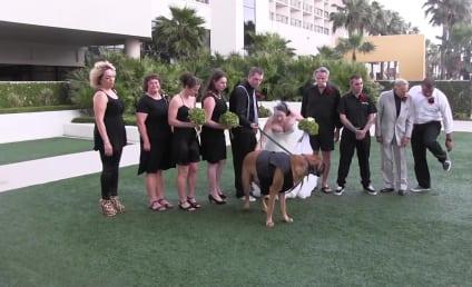 Dog Serves as Ring Bearer, Ruins Wedding Photos
