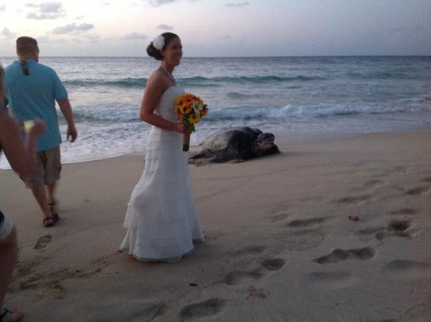 Sea Turtle Crashes Wedding