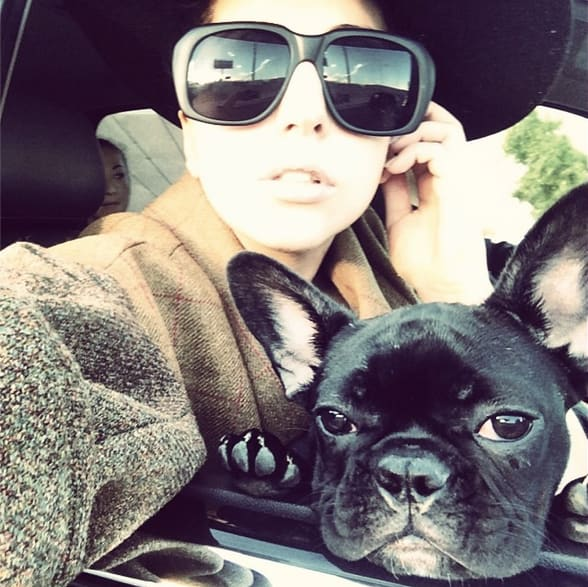 Lady Gaga and Dog Selfie