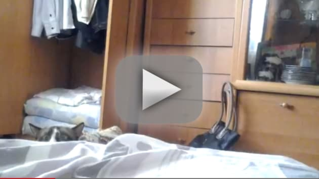 Cat and Owner Play Peekaboo