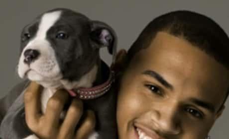 Chris Brown, Dog
