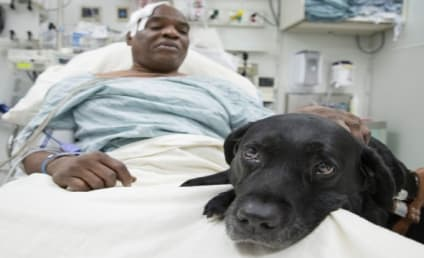 Blind Man Falls on Subway Tracks, Gets Saved by Guide Dog