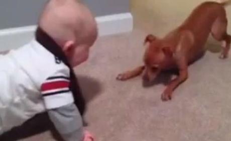 Baby vs. Puppy!
